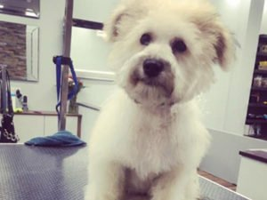 Dog Grooming Client at Short Bark and Sides Surrey 18
